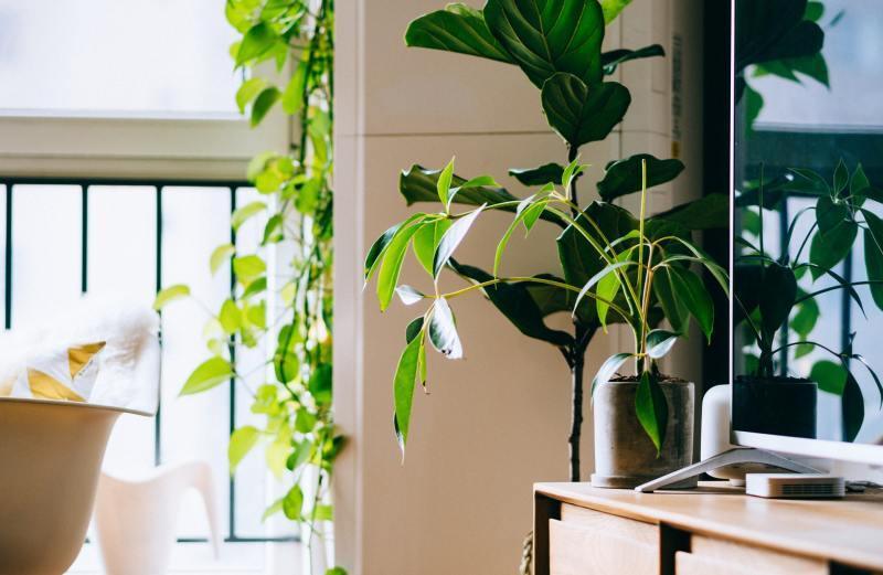 Feng Shui Como incluir plantas na sua casa seguindo a prática 01 Vision Art NEWS