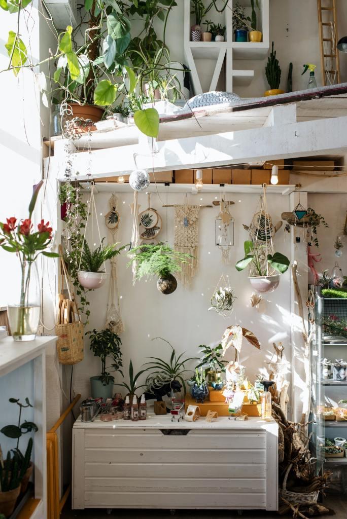 Feng Shui Como incluir plantas na sua casa seguindo a prática 04 Vision Art NEWS