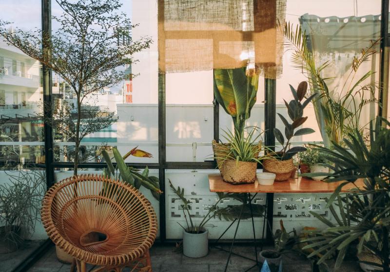 Feng Shui Como incluir plantas na sua casa seguindo a prática 06 Vision Art NEWS