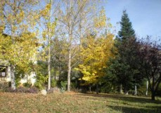 El jardín en otoño