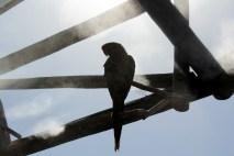 Papegøye i solen