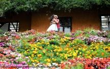 e-session_casamento_campos_jordao_0016