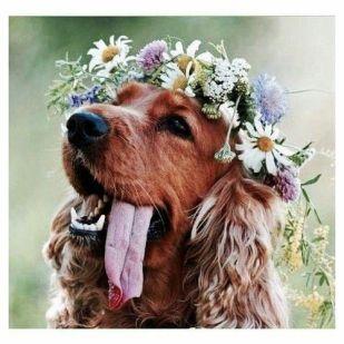 casamento_boho_animais_cachorro