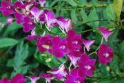 934809_orchids_4