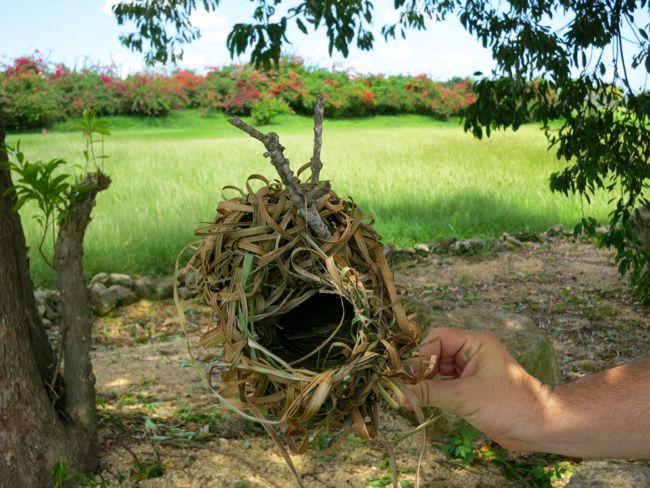 madame saga nest