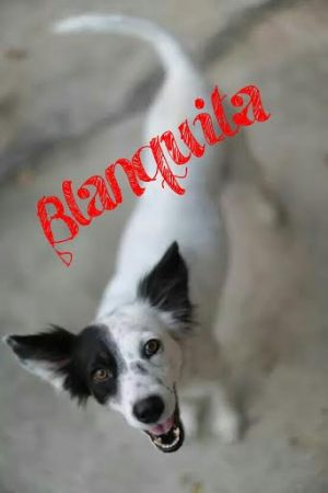 blanquita_collares_rojos