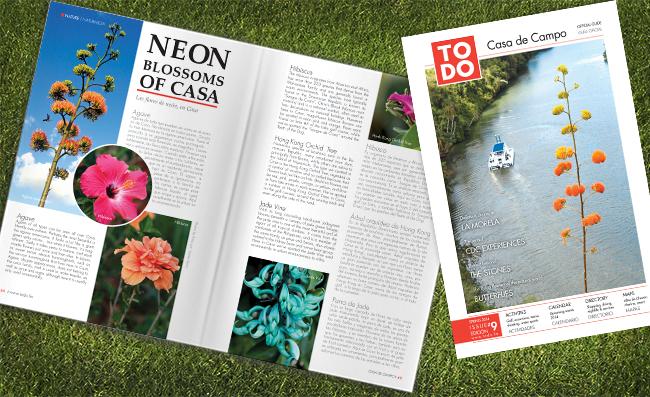 TODO #9 Neon Blooms