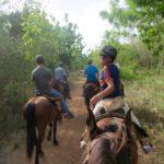 Horseback Riding Casa