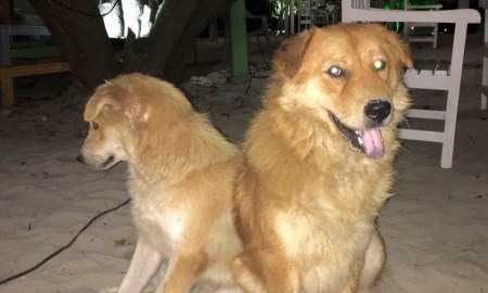 Home Search for abandoned dogs