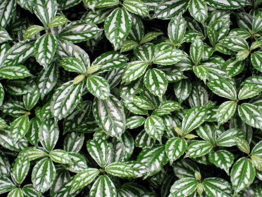 plantas para pouca luz