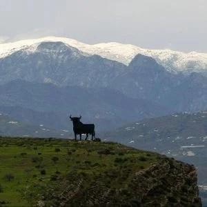 Toro de Almayate (axarquia) con la Maroma de forndo
