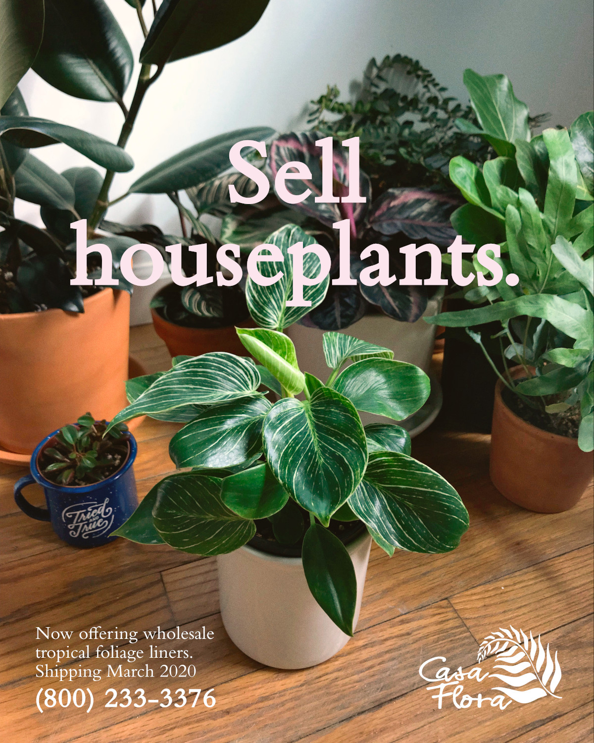 "Casa Flora's ""Sell House Plants"" flyer offering wholesale foliage plants for sale. Call 800-233-3376 to order."