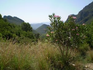 Gandia countryside