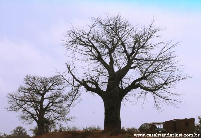 Baobás pelo caminho