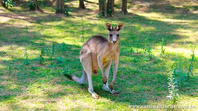 canguru-sydney