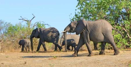 Dica de viagem: O que fazer em Botswana