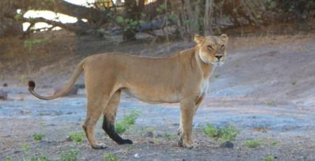 Botswana: Mochilão de 5 dias pelo país