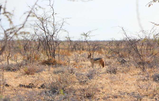 Nos meses mais secos a vegetação fica mais propícia para avistar os animais