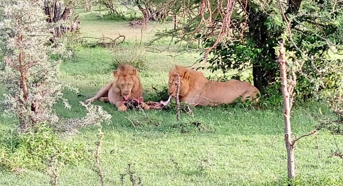 Masai Mara no Quênia
