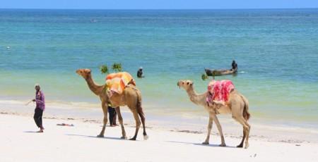 O que fazer no Quênia – 10 principais atrações