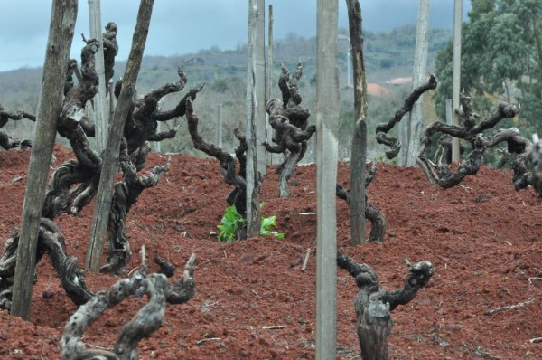 Etna_VineyardVisit