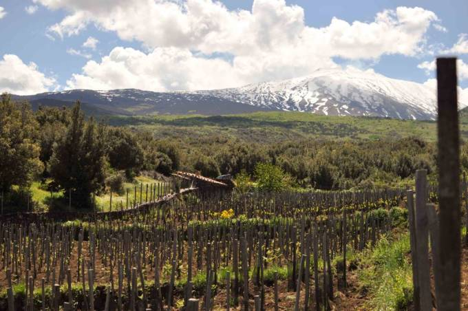 Vineyards in the Etna area of Sicily