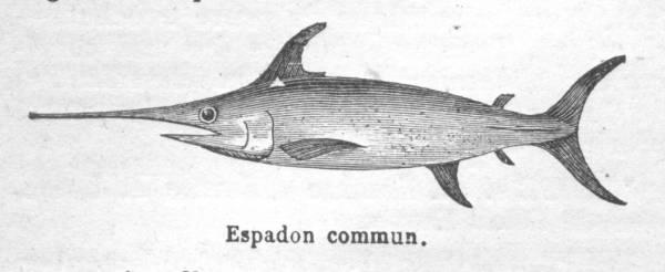 sicilian swordfish dish · www.italyfoodandwinetours.com