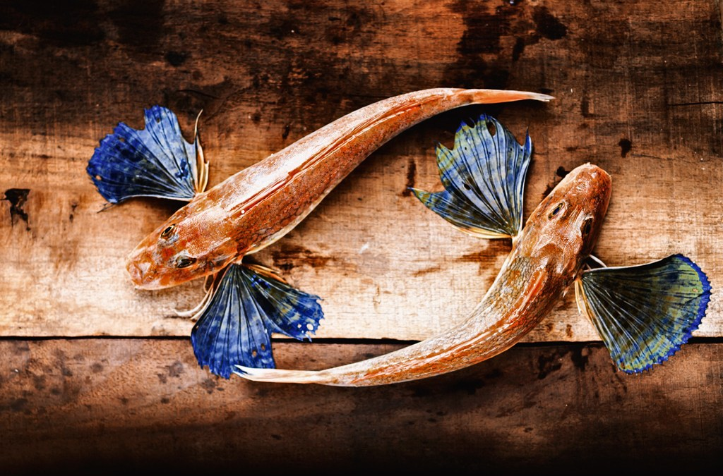 Catch of the Day, Recipes and Culinary Adventures in Southern Italy