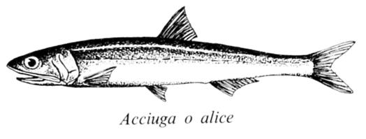 anchovies · www.italyfoodandwinetours.com
