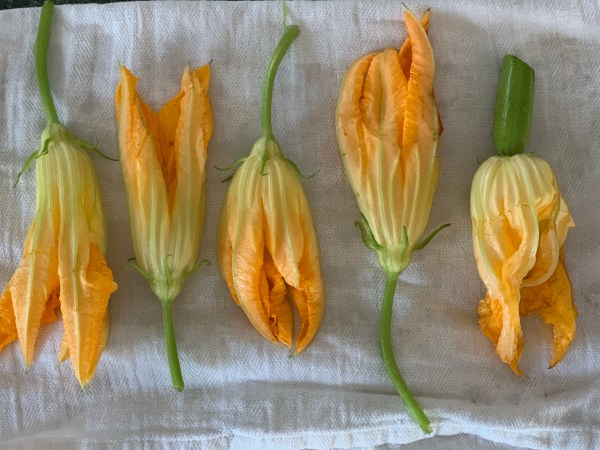 dry the zucchini blossoms
