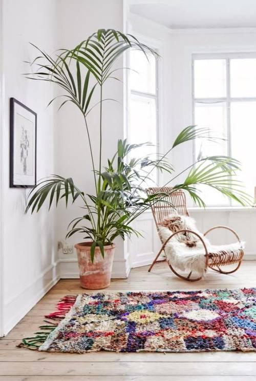 cuidar plantas en casa