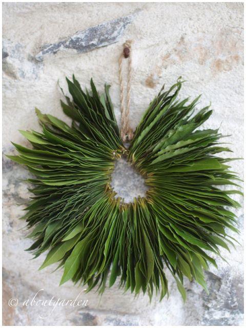 plantas aromáticas para decorar