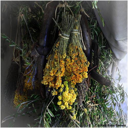 conservar hierbas aromáticas y condimentos