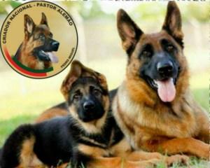 Os cães 4