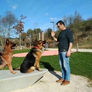 Os cães 2