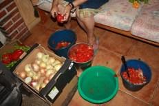 Pelando los tomates
