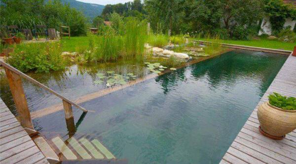 natural-pool-gallery-15