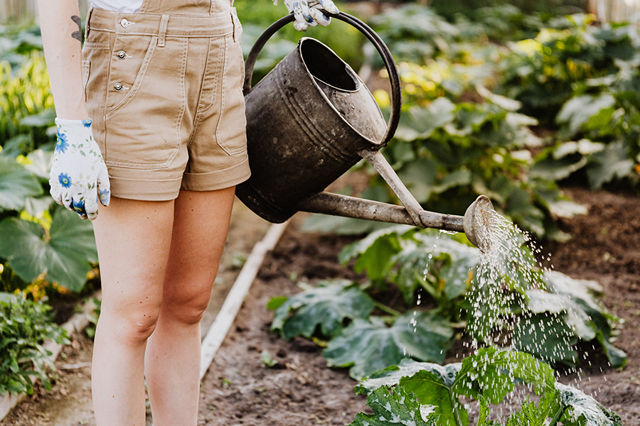 tips para cuidad el jardín, regar el jardin