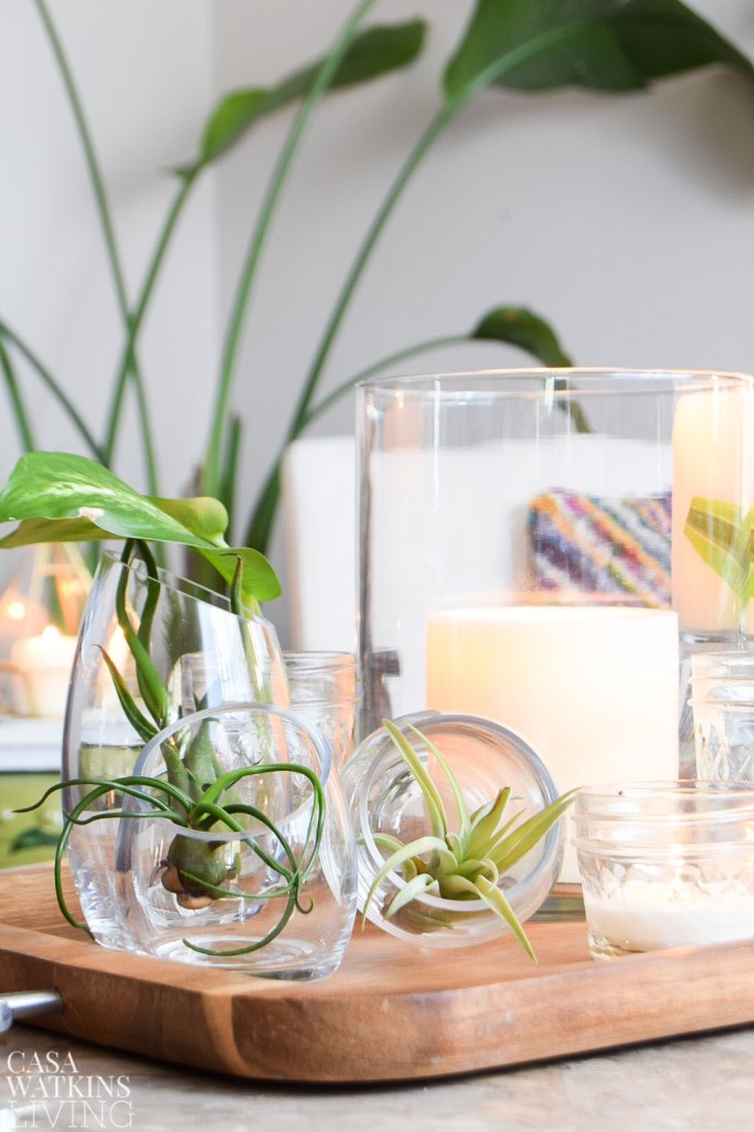 air plants in glass votives on tray for table centerpiece