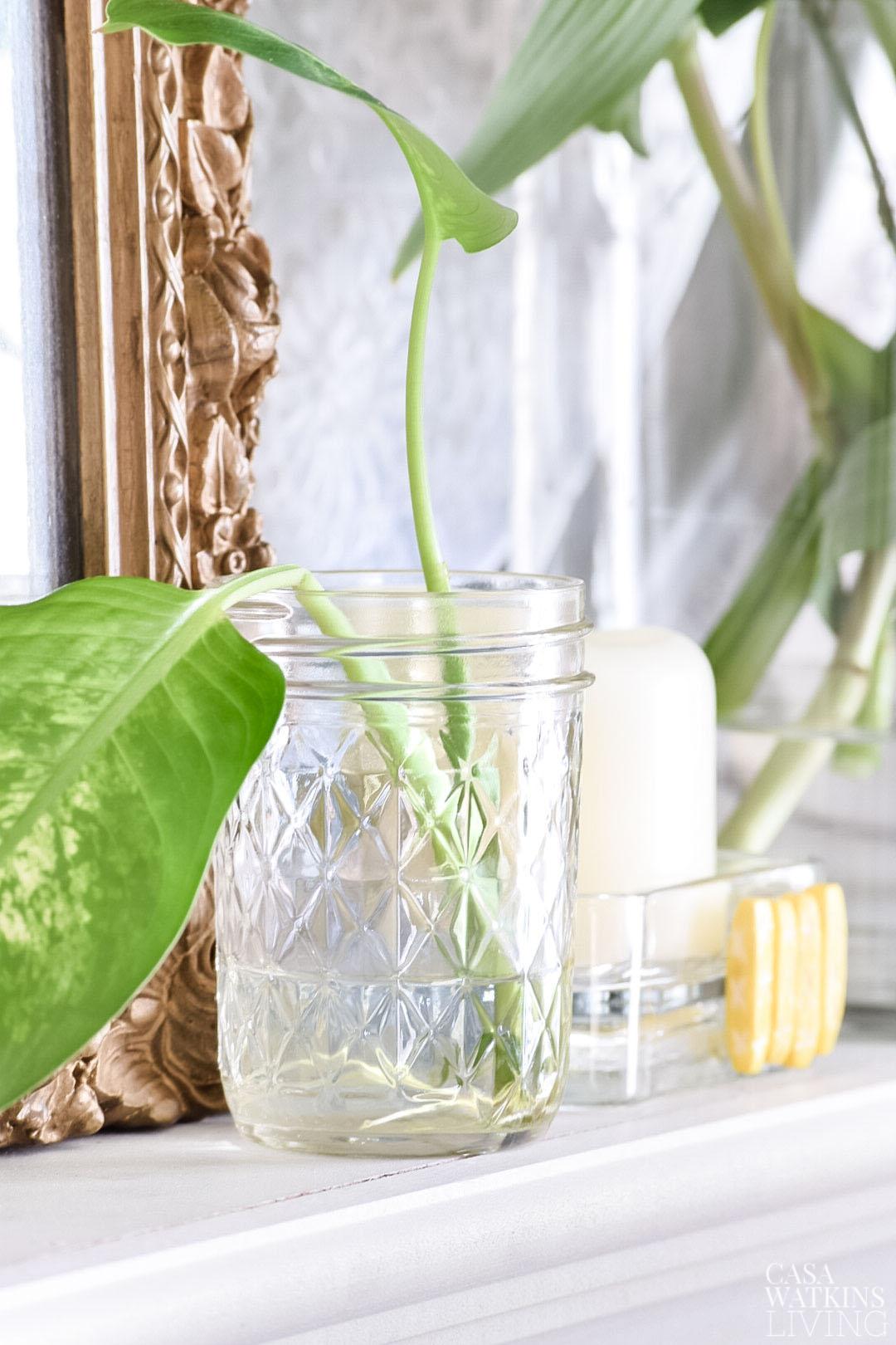 mason jars with plant leaves