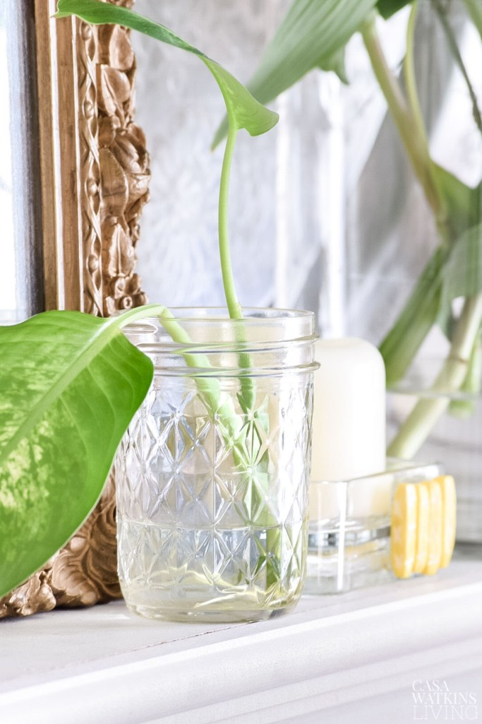 mason jars with plant leaves