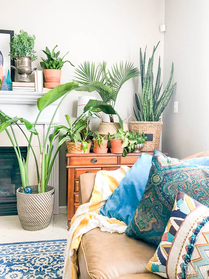 decorating with plants for spring