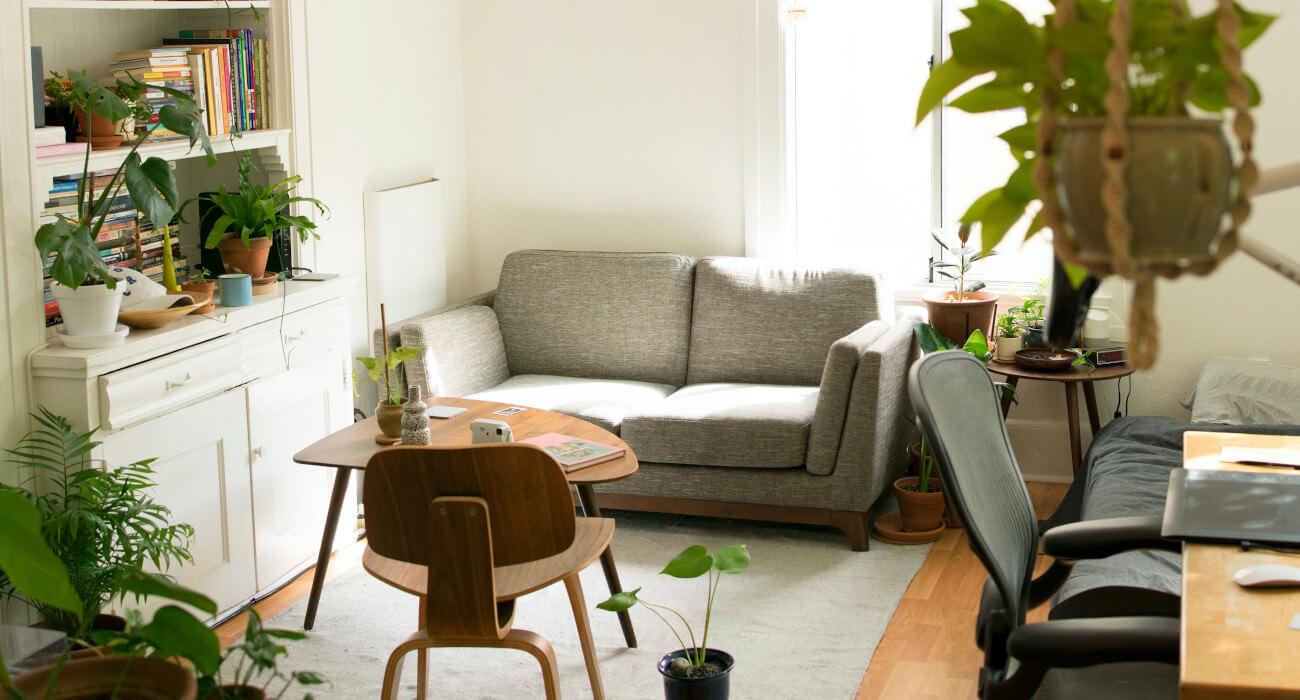 Sala con plantas decorativas 
