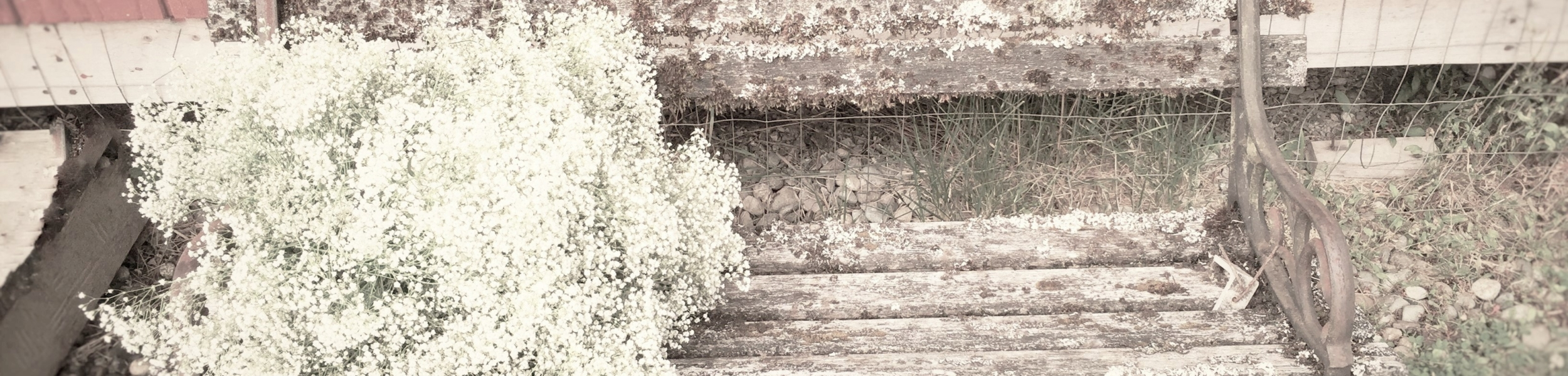 vintage-garden-bench-with-babiesbreath-flowers