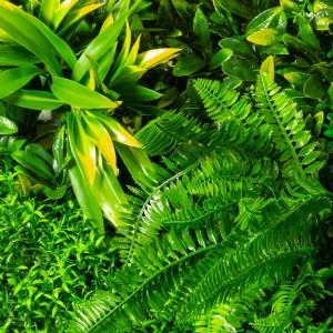 Casacade Greenery Product Photos Paradise