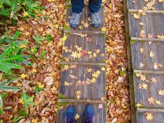 The wooden boardwalk on the Senjogahara Hiking Trail