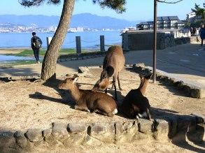 A public bath for the deer