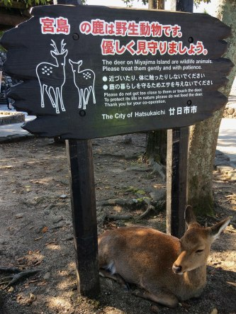 I like to think this deer knew what the sign said