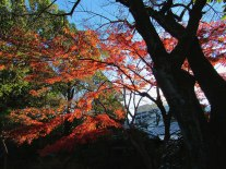 gardens_fall_colors