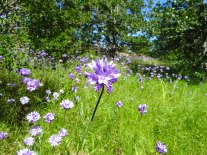 Wildflowers along the Catherine Creek Universal Access Trail in Lyle, Wash.
